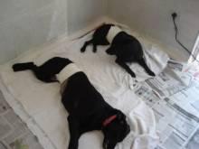 Senado aprova projeto para castração de animais de rua