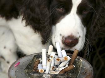 fumante_passivo