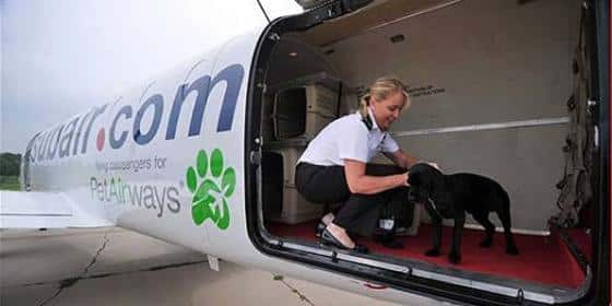 PetAirways é a 1ª companhia aérea para animais de estimação do mundo