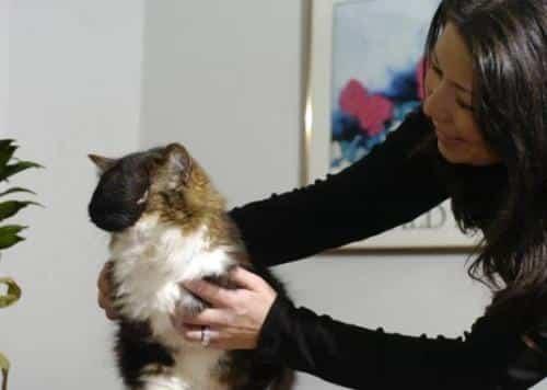 """Gato com """"topete"""" vira celebridade"""