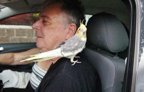 Pelas Ruas de Porto Alegre: casal de idosos encontra companhia em aves calopsitas