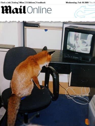 Raposa mora com casal inglês e tem quarto com TV