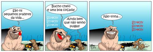 animais_de_rua10