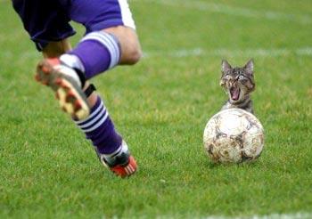cat_ball