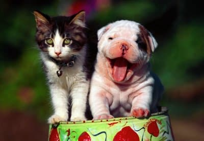 Estética de cães e gatos preocupa donos de pet mais do que visitas ao veterinário