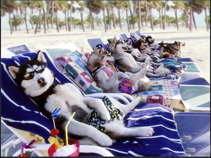 dog_vacation