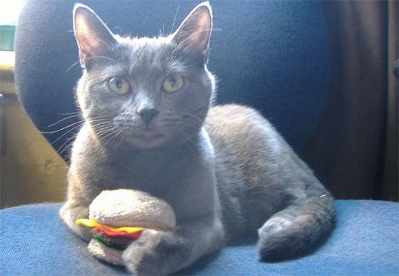Hambúrguer para os gatinhos