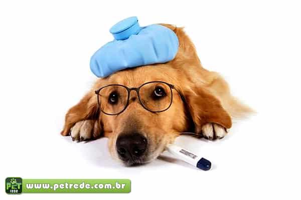 Pet: Doenças e Sintomas
