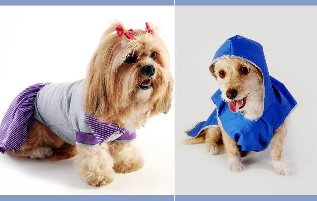 Mais estilo para pets fashionistas