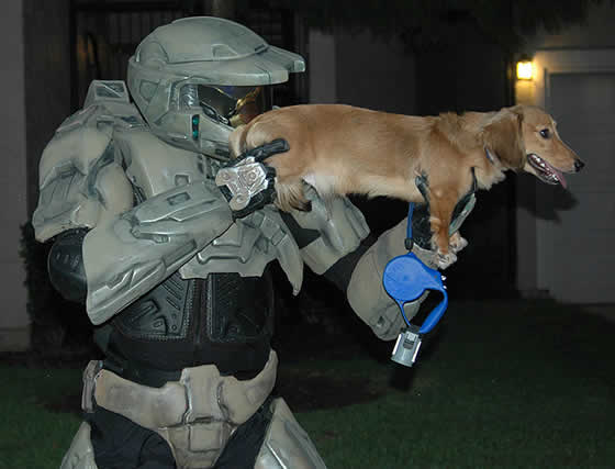 cachorro-arma-halo-dog