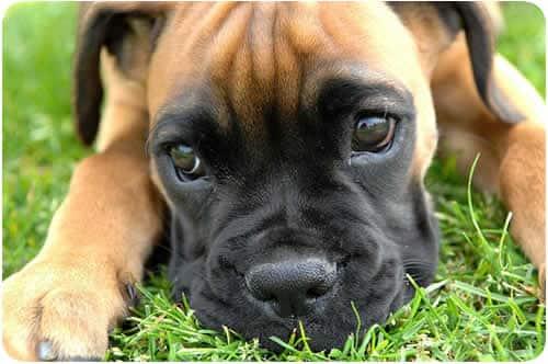 Pequenos truques podem deixar seu cão mais disciplinado