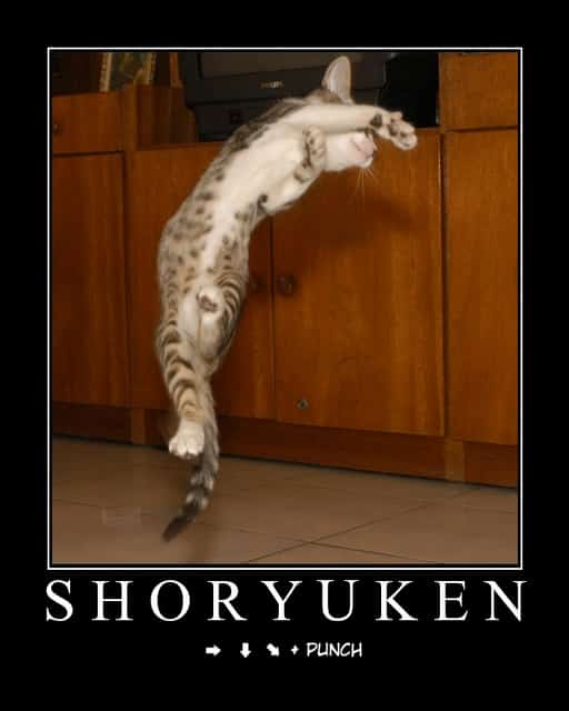 gato-dando-shoryuken-street-fighter