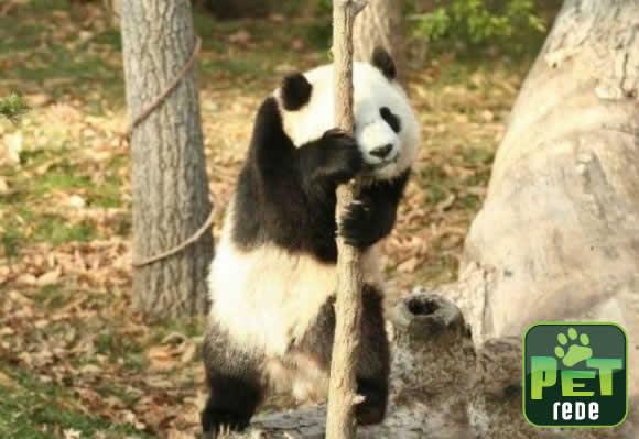 voce-e-capaz-de-encontrar-o-panda