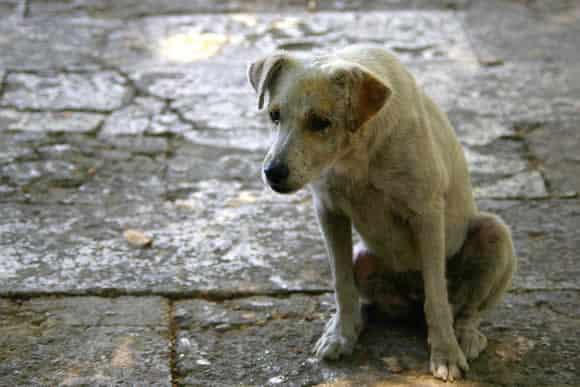 """Cachorros são """"melhores que pai e mãe"""" para moradores de rua"""