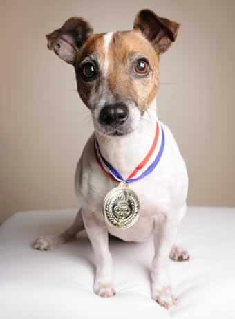 pet-rede-cachorro-medalha-campeao-vencedor