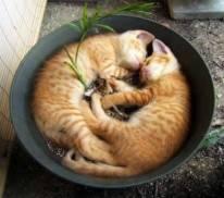 pet-rede-gato-dormindo-06