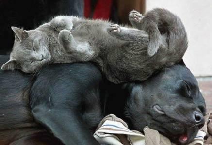 pet-rede-gato-dormindo-13
