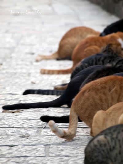Os cuidados com a saúde dos gatos