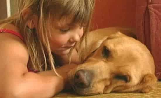 Labrador avisa menina diabética quando taxa de açúcar se altera
