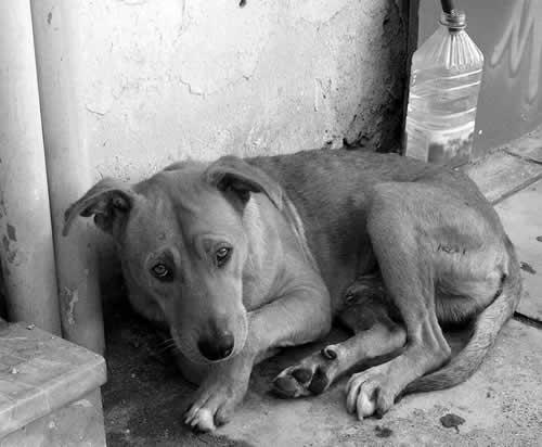 Abandonar os animais de estimação é crime!