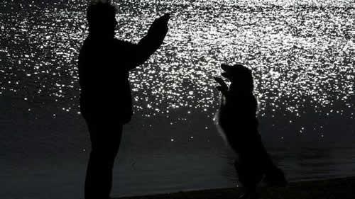 Cães são capazes de imitar movimentos feitos pelos donos
