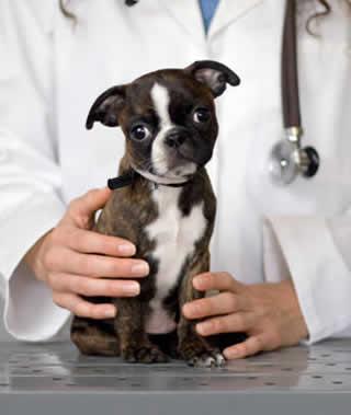 Escolha o plano de saúde para seu pet