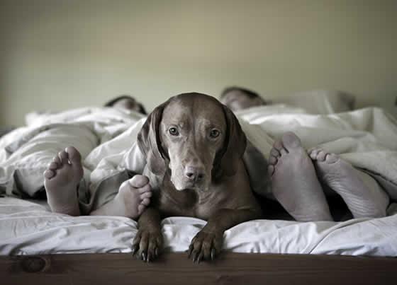 petrede-cachorro-cama