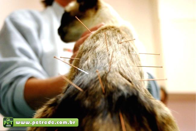 gato-acupuntura-petrede