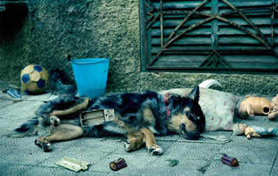 Animal de estimação não é brinquedo, mostra ação