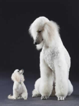 petrede-cachorro-grande-cachorro-pequeno