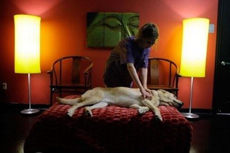 Surfe e limusine: veja mordomias para cães em hotéis de luxo
