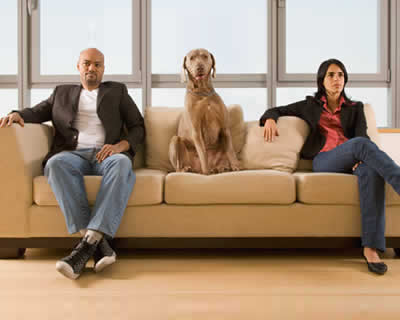 Projeto quer regulamentar guarda de animais para divórcio