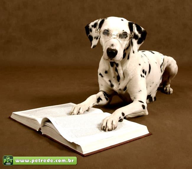 """Um livro para agradar o """"melhor amigo do homem"""""""