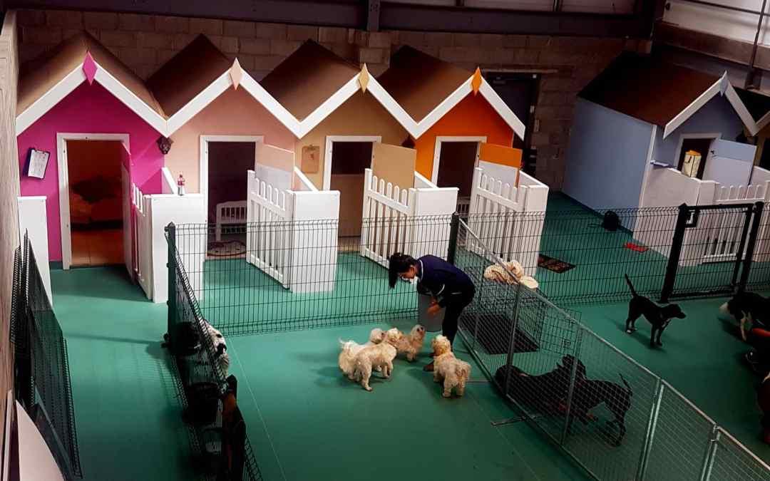 Para conforto dos donos, clínicas de animais hospedam até cavalos