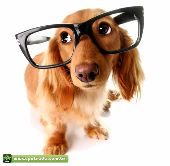 Saiba como estimular a inteligência do seu cão
