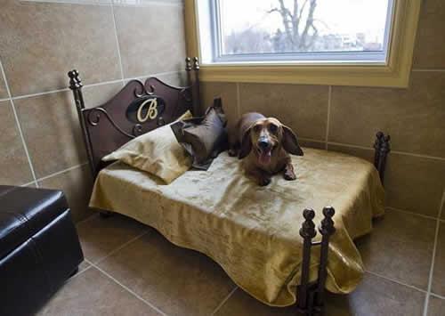 petrede-cachorro-hotel-cama