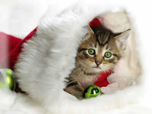 petrede-gato-presente-natal