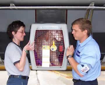 Confira os cuidados ao viajar com seu animal de estimação no avião
