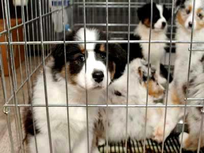 Grupos em defesa de animais denunciam canil por tratamento inadequado