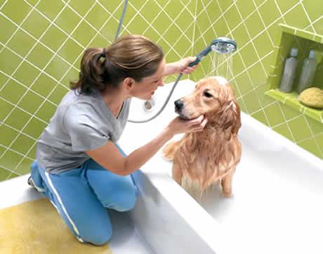 petrede-cachorro-tomando-banho-na-banheira