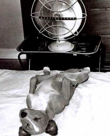 petrede-cachorro-ventilador-verao-calor