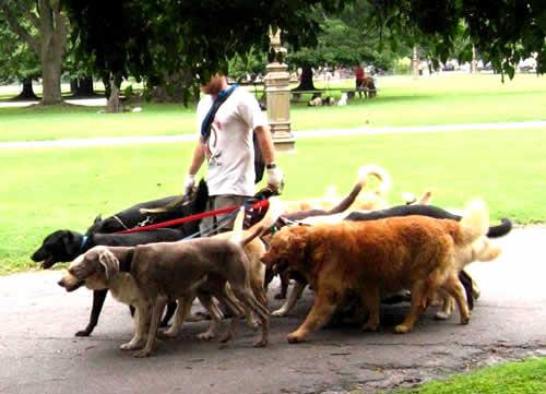 Passeadores de cães são opção para quem não tem tempo para os animais de estimação