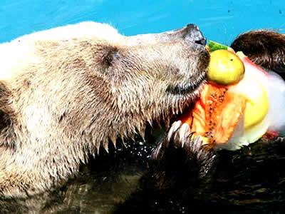 Animais de zoo ganham 'picolés' para espantar o calor no Rio