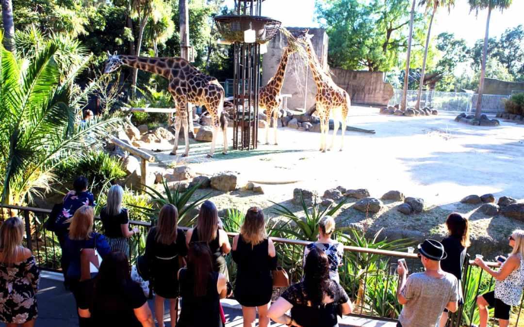 Confira os bichos mais visitados do zoológico
