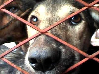 Preso homem que torturou e matou 29 filhotes de cachorro nos EUA
