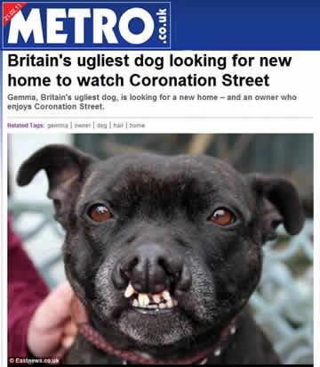 """""""Cão mais feio"""" do Reino Unido tem dificuldades para achar novo lar"""
