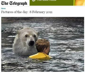 Visitantes nadam ao lado de ursos polares no Canadá