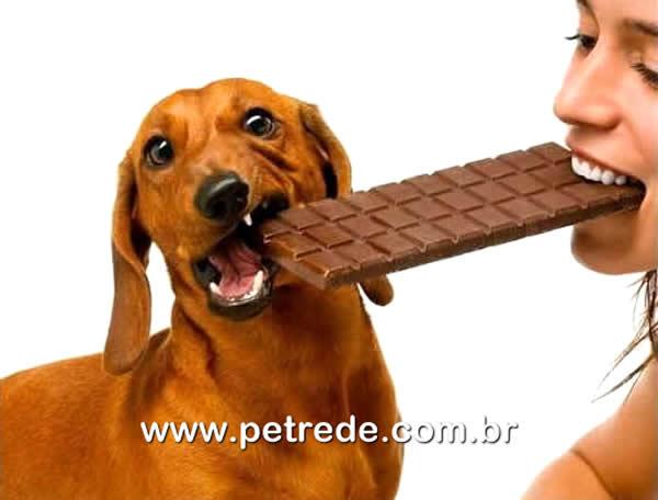 Seu pet não deve comer chocolate. Veja dicas para alimentação de animais de estimação