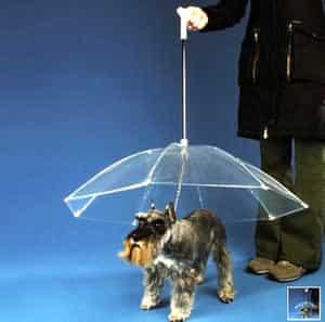 Loja inventa coleira com guarda-chuva para cachorros