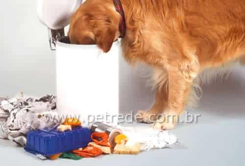 cachorro-comendo-lixo-petrede